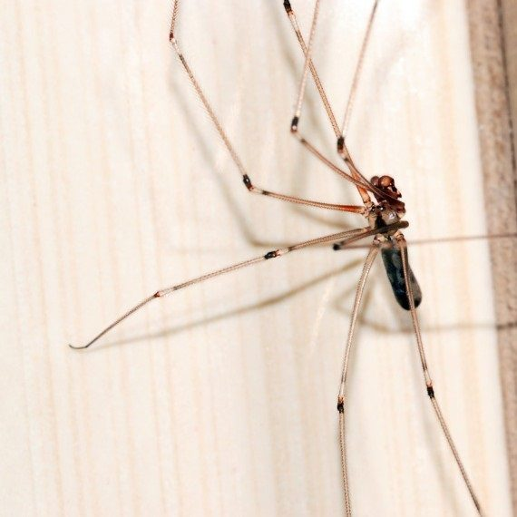 Spiders, Pest Control in Bermondsey, Borough, Southwark, SE1. Call Now! 020 8166 9746